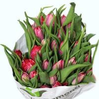 Тюльпаны –2