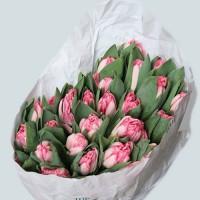 Тюльпаны –3