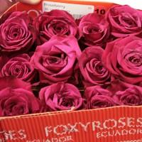 Роза Roseberry 80 см
