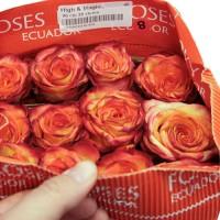 Роза High & Magic 80 см