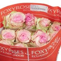 Роза Esperance 80 см