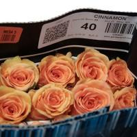 Роза Cinnamon