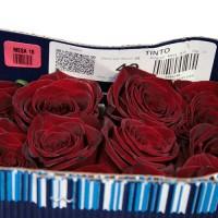 Роза Tinto