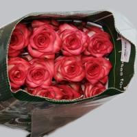Роза Блаш (Blush)