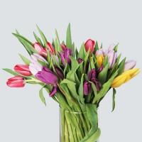 Тюльпаны (от 10 штук)